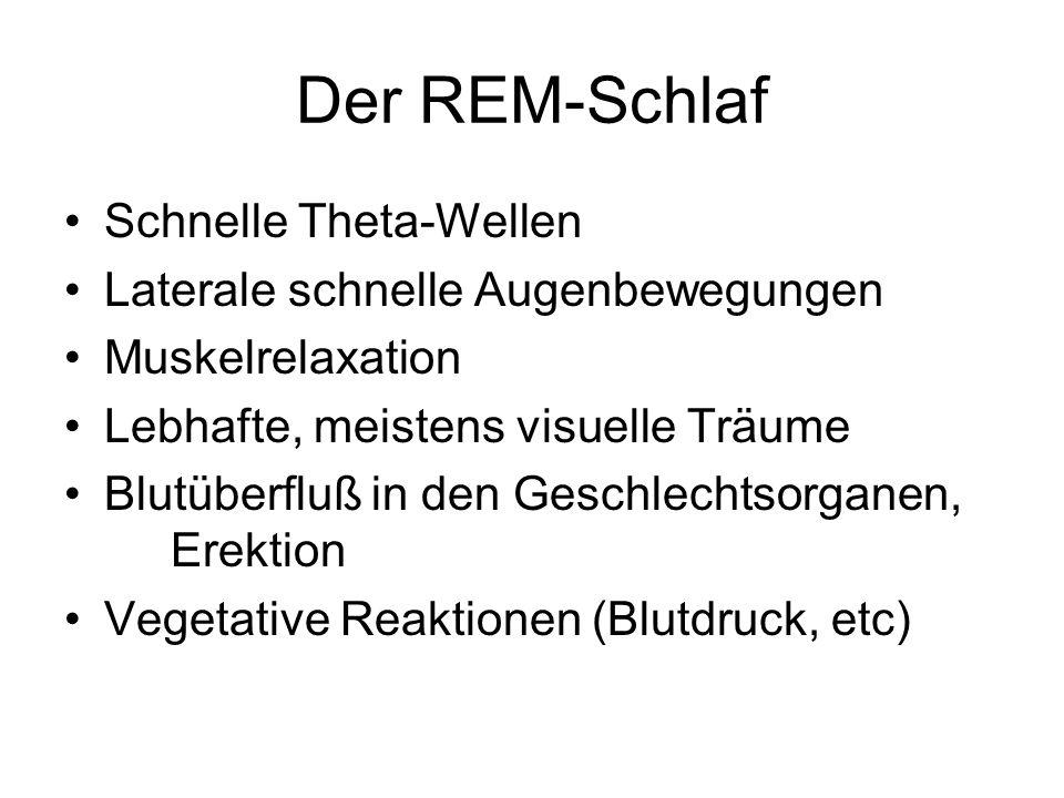 Der REM-Schlaf Schnelle Theta-Wellen Laterale schnelle Augenbewegungen Muskelrelaxation Lebhafte, meistens visuelle Träume Blutüberfluß in den Geschlechtsorganen, Erektion Vegetative Reaktionen (Blutdruck, etc)