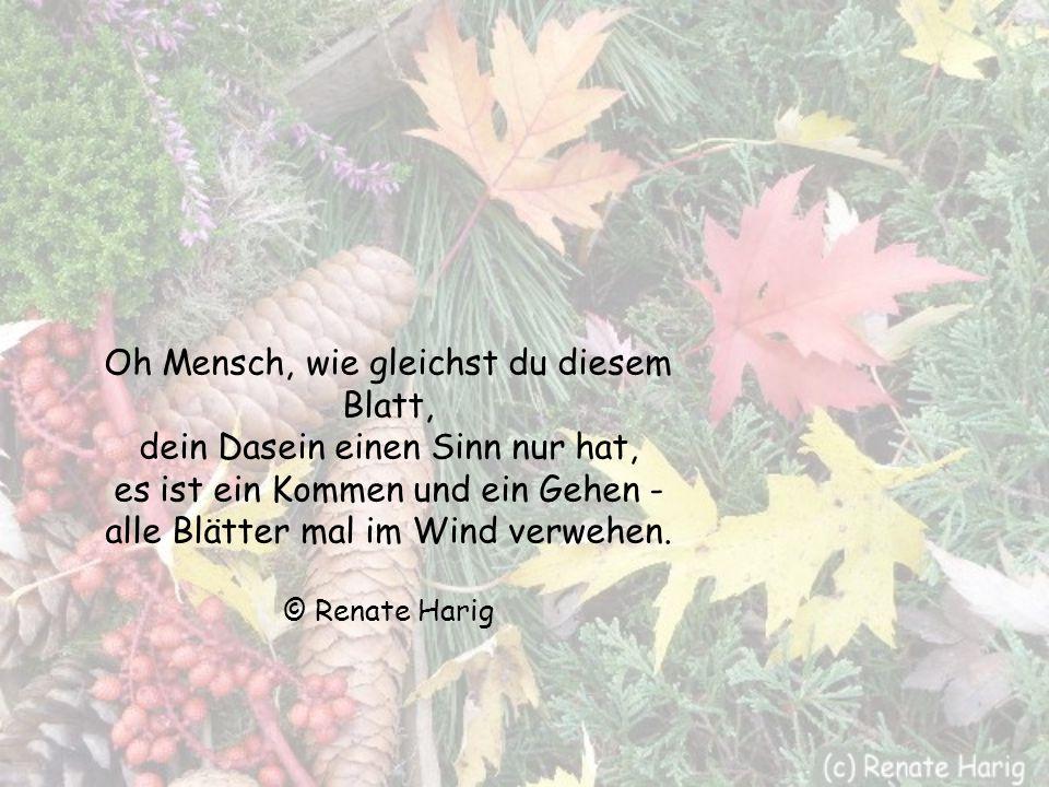 Der Herbst durchstreift das Land, und wie von Geisterhand verändert sich die Welt, das letzte Blatt, es fällt, taumelnd, ganz benommen auf die Erde -
