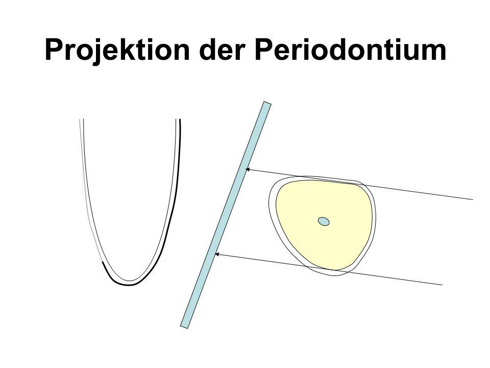 Projektion der Periodontium