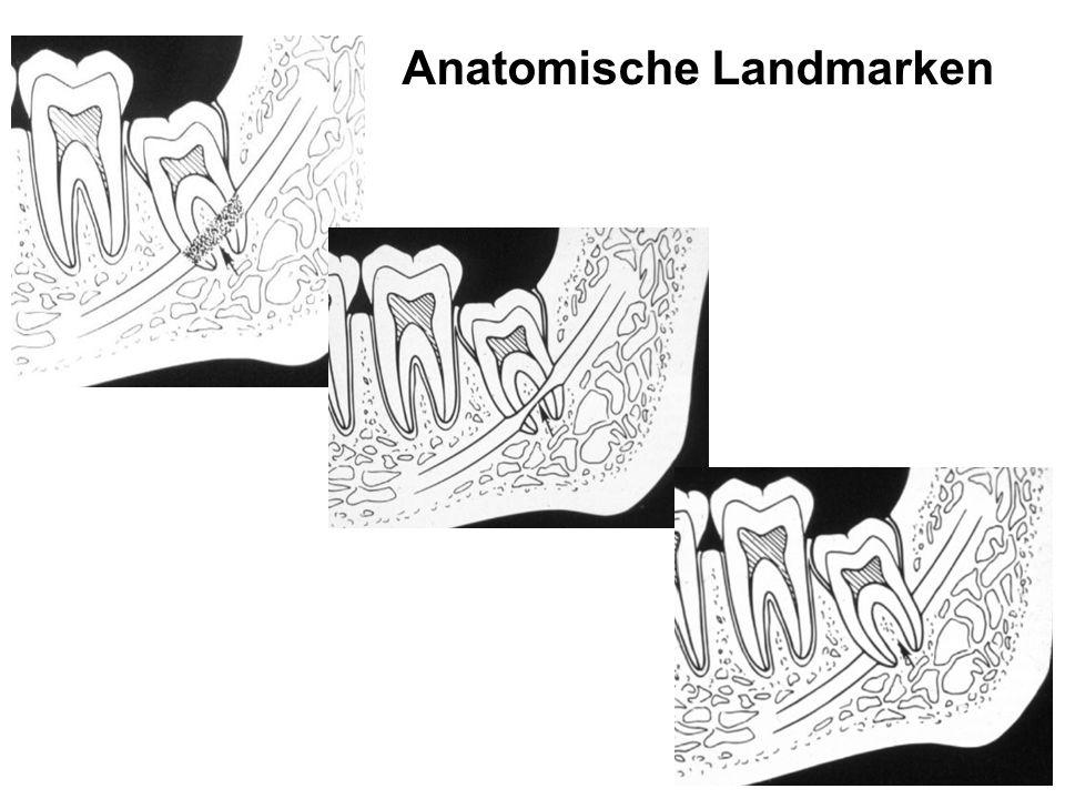 Anatomische Landmarken