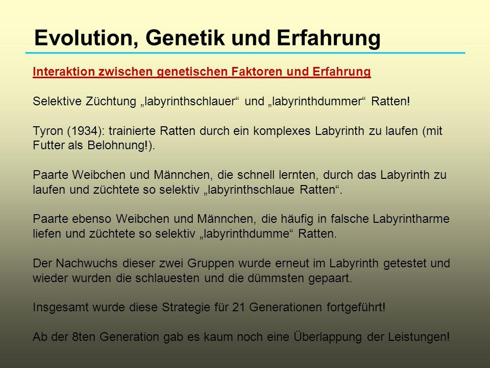 Evolution, Genetik und Erfahrung Interaktion zwischen genetischen Faktoren und Erfahrung Selektive Züchtung labyrinthschlauer und labyrinthdummer Ratt