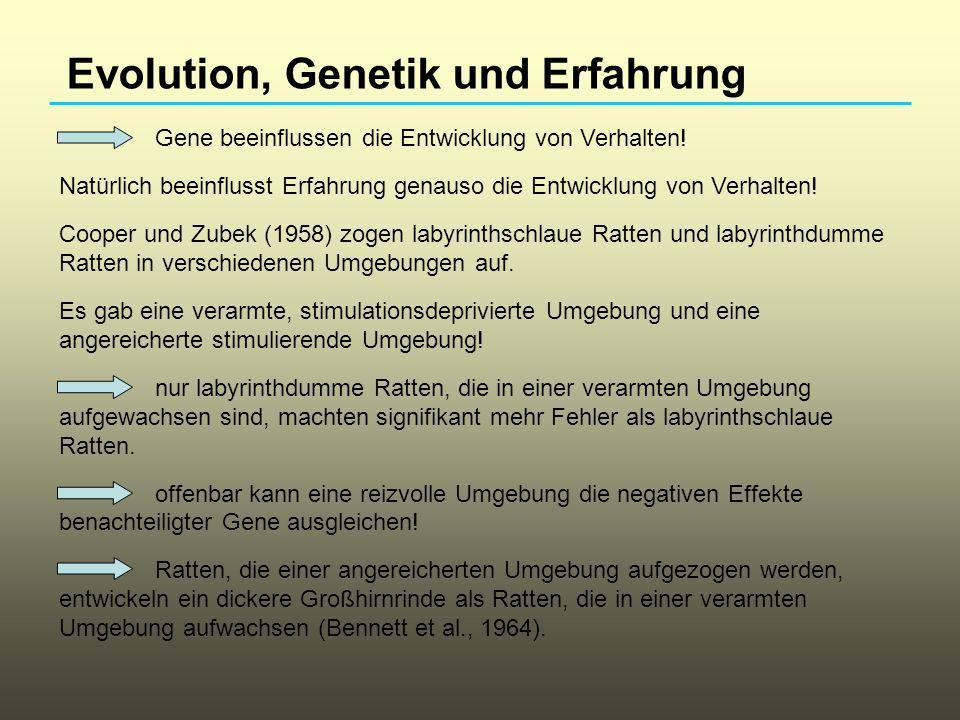 Evolution, Genetik und Erfahrung Gene beeinflussen die Entwicklung von Verhalten! Natürlich beeinflusst Erfahrung genauso die Entwicklung von Verhalte