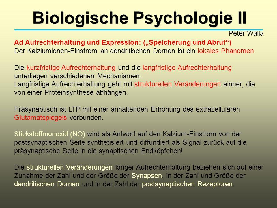 Biologische Psychologie II Peter Walla Ad Aufrechterhaltung und Expression: (Speicherung und Abruf) Der Kalziumionen-Einstrom an dendritischen Dornen ist ein lokales Phänomen.