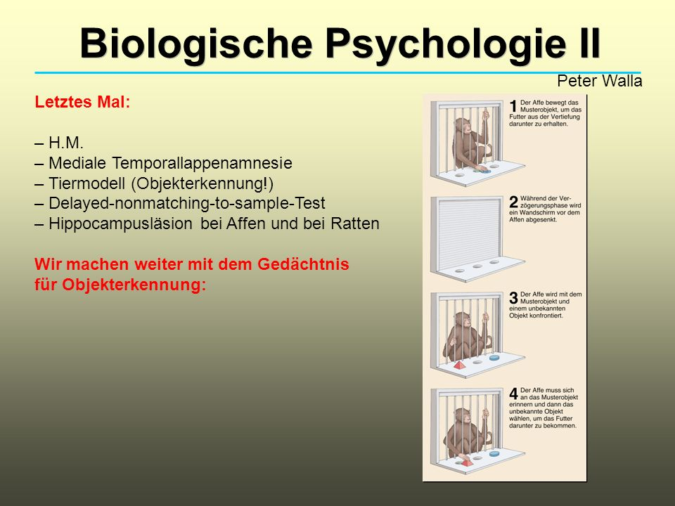 Biologische Psychologie II Peter Walla Letztes Mal: – H.M.