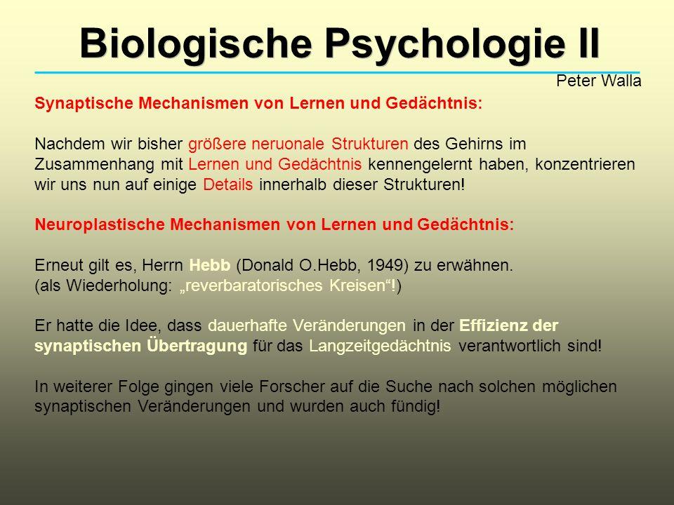 Biologische Psychologie II Peter Walla Synaptische Mechanismen von Lernen und Gedächtnis: Nachdem wir bisher größere neruonale Strukturen des Gehirns im Zusammenhang mit Lernen und Gedächtnis kennengelernt haben, konzentrieren wir uns nun auf einige Details innerhalb dieser Strukturen.