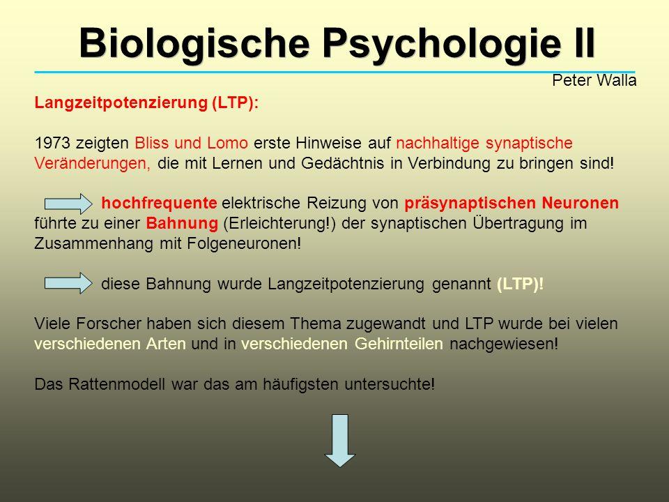 Biologische Psychologie II Peter Walla Langzeitpotenzierung (LTP): 1973 zeigten Bliss und Lomo erste Hinweise auf nachhaltige synaptische Veränderungen, die mit Lernen und Gedächtnis in Verbindung zu bringen sind.