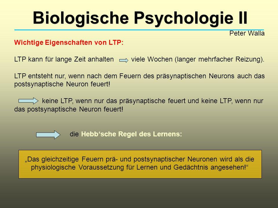 Biologische Psychologie II Peter Walla Wichtige Eigenschaften von LTP: LTP kann für lange Zeit anhalten viele Wochen (langer mehrfacher Reizung).