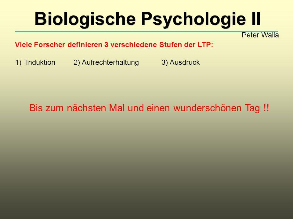 Biologische Psychologie II Peter Walla Viele Forscher definieren 3 verschiedene Stufen der LTP: 1)Induktion2) Aufrechterhaltung3) Ausdruck Bis zum nächsten Mal und einen wunderschönen Tag !!