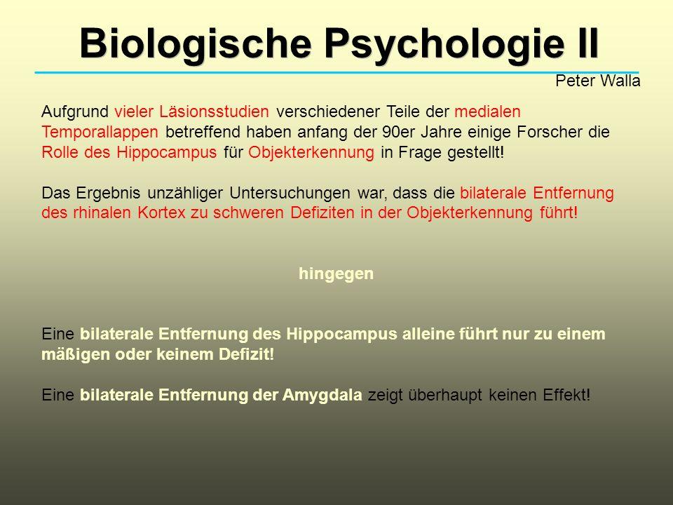 Biologische Psychologie II Peter Walla Aufgrund vieler Läsionsstudien verschiedener Teile der medialen Temporallappen betreffend haben anfang der 90er Jahre einige Forscher die Rolle des Hippocampus für Objekterkennung in Frage gestellt.