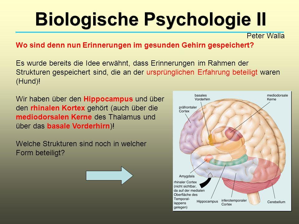 Biologische Psychologie II Peter Walla Wo sind denn nun Erinnerungen im gesunden Gehirn gespeichert.