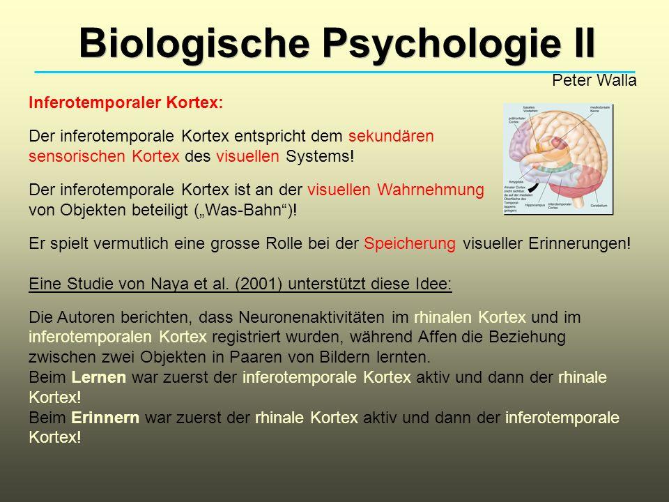 Biologische Psychologie II Peter Walla Inferotemporaler Kortex: Der inferotemporale Kortex entspricht dem sekundären sensorischen Kortex des visuellen Systems.