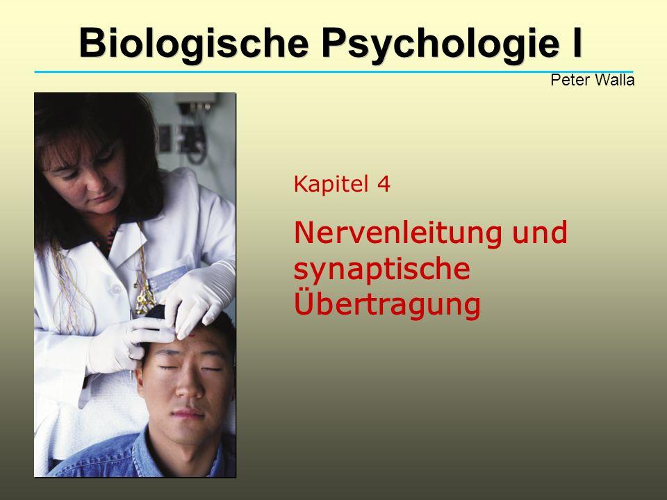 Nervenleitung und synaptische Übertragung Wie werden Nervensignale erzeugt.