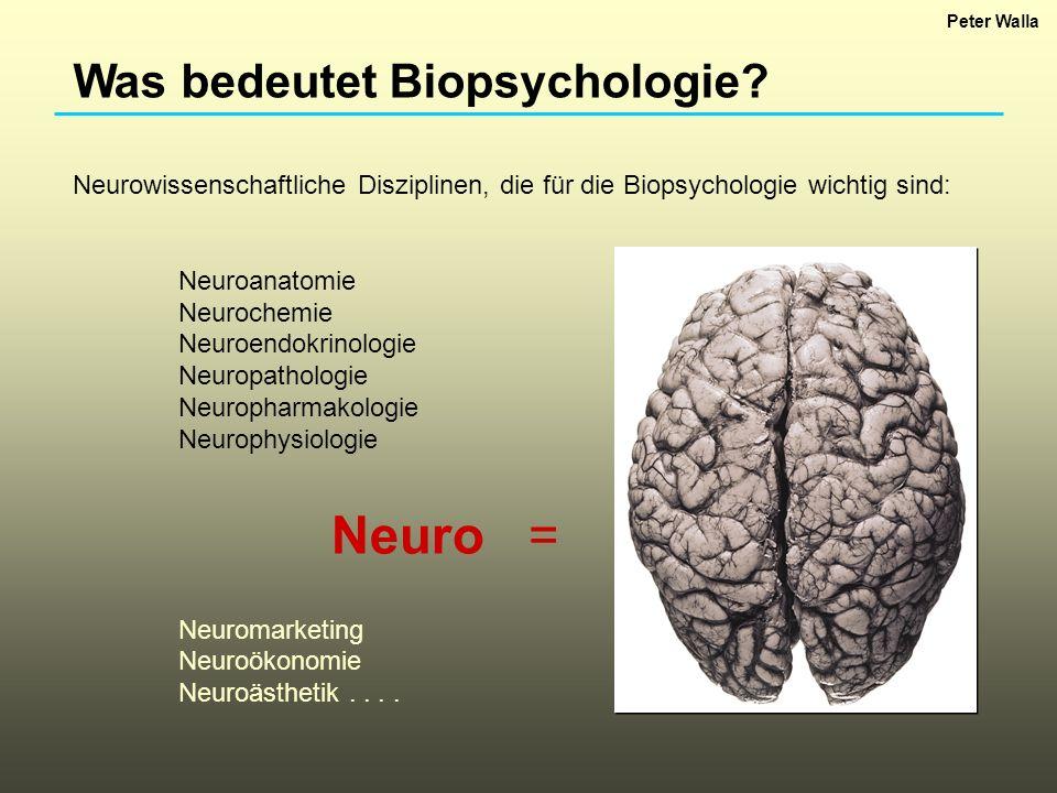 Was bedeutet Biopsychologie? Neurowissenschaftliche Disziplinen, die für die Biopsychologie wichtig sind: Neuroanatomie Neurochemie Neuroendokrinologi