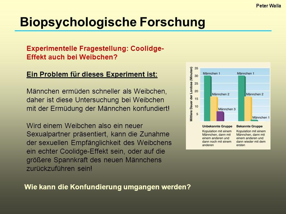 Biopsychologische Forschung Experimentelle Fragestellung: Coolidge- Effekt auch bei Weibchen? Ein Problem für dieses Experiment ist: Männchen ermüden