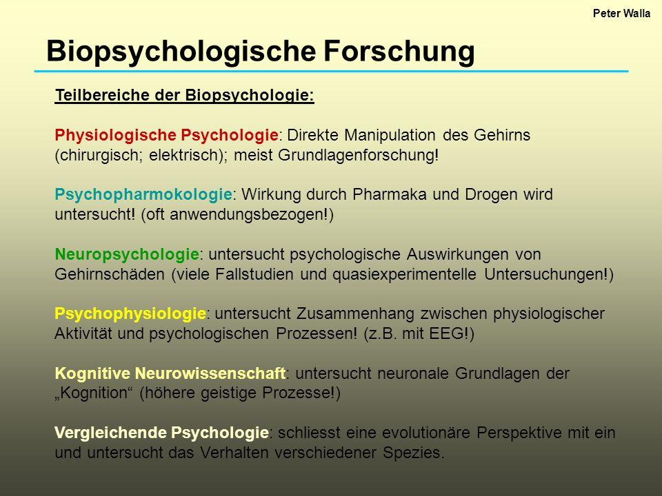 Biopsychologische Forschung Teilbereiche der Biopsychologie: Physiologische Psychologie: Direkte Manipulation des Gehirns (chirurgisch; elektrisch); m