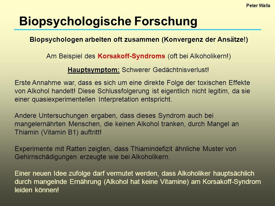 Biopsychologische Forschung Biopsychologen arbeiten oft zusammen (Konvergenz der Ansätze!) Am Beispiel des Korsakoff-Syndroms (oft bei Alkoholikern!)