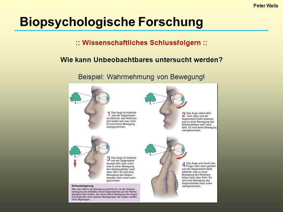 Biopsychologische Forschung :: Wissenschaftliches Schlussfolgern :: Wie kann Unbeobachtbares untersucht werden? Beispiel: Wahrmehmung von Bewegung! Pe