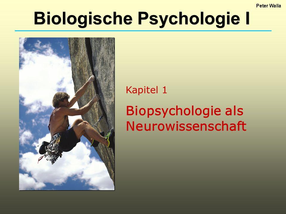 Kapitel 1 Biopsychologie als Neurowissenschaft Biologische Psychologie I Peter Walla