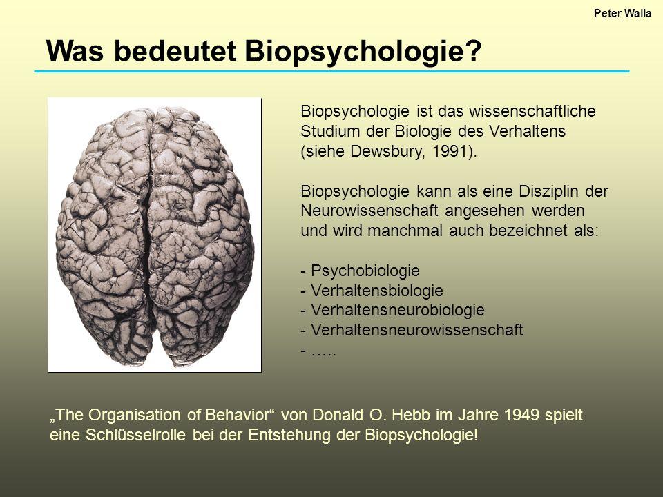 Was bedeutet Biopsychologie? Biopsychologie ist das wissenschaftliche Studium der Biologie des Verhaltens (siehe Dewsbury, 1991). Biopsychologie kann