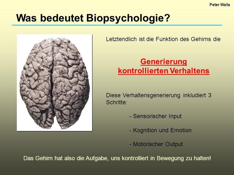 Was bedeutet Biopsychologie? Letztendlich ist die Funktion des Gehirns die Generierung kontrollierten Verhaltens Diese Verhaltensgenerierung inkludier