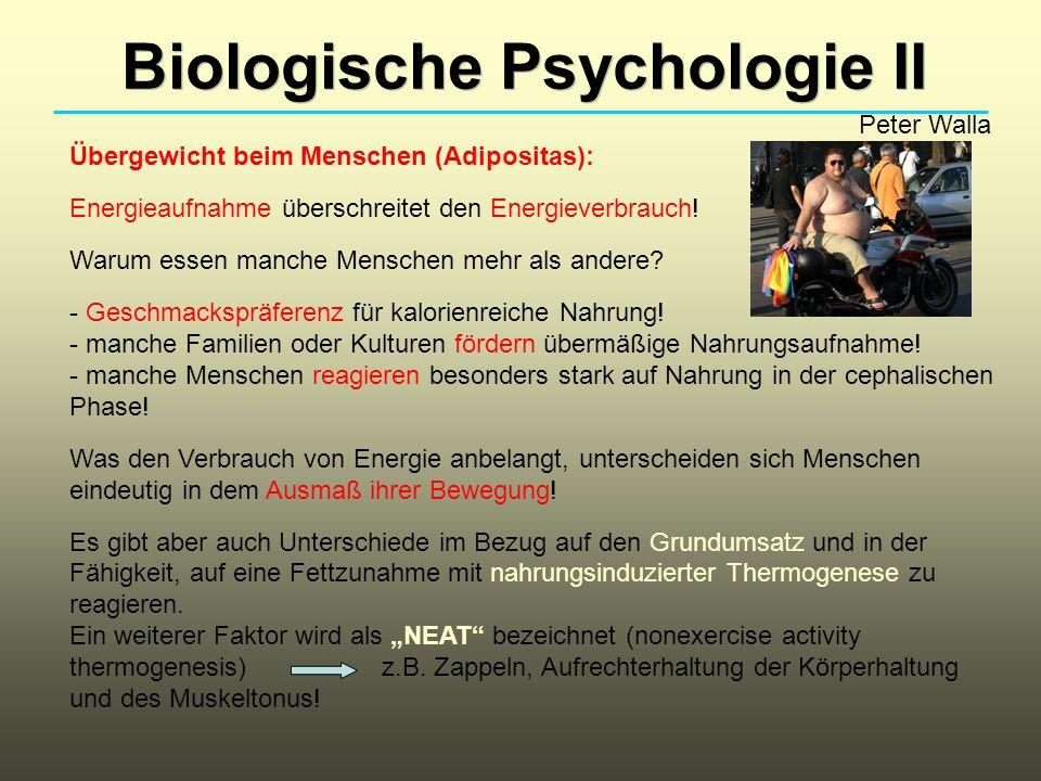 Biologische Psychologie II Peter Walla Übergewicht beim Menschen (Adipositas): Energieaufnahme überschreitet den Energieverbrauch! Warum essen manche