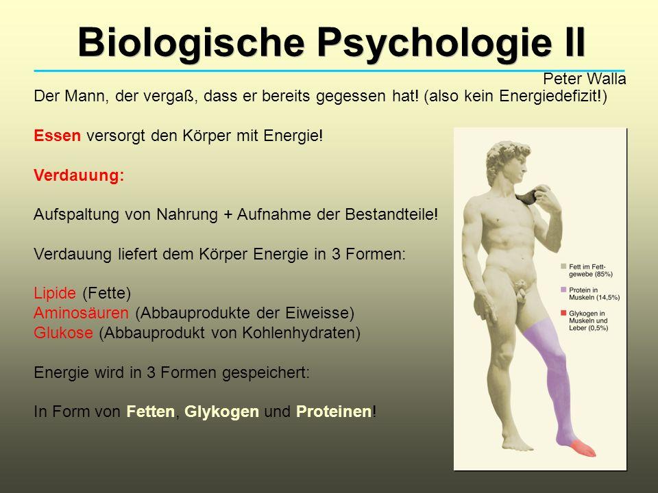 Biologische Psychologie II Peter Walla Der Mann, der vergaß, dass er bereits gegessen hat! (also kein Energiedefizit!) Essen versorgt den Körper mit E