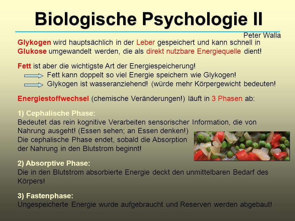 Biologische Psychologie II Peter Walla Glykogen wird hauptsächlich in der Leber gespeichert und kann schnell in Glukose umgewandelt werden, die als di