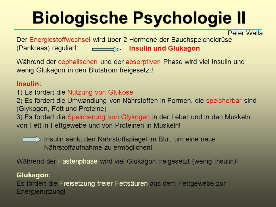 Biologische Psychologie II Peter Walla Der Energiestoffwechsel wird über 2 Hormone der Bauchspeicheldrüse (Pankreas) reguliert: Während der cephalisch