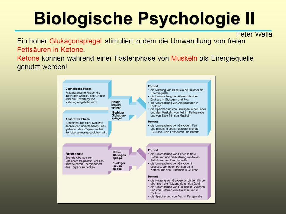 Biologische Psychologie II Peter Walla Ein hoher Glukagonspiegel stimuliert zudem die Umwandlung von freien Fettsäuren in Ketone. Ketone können währen