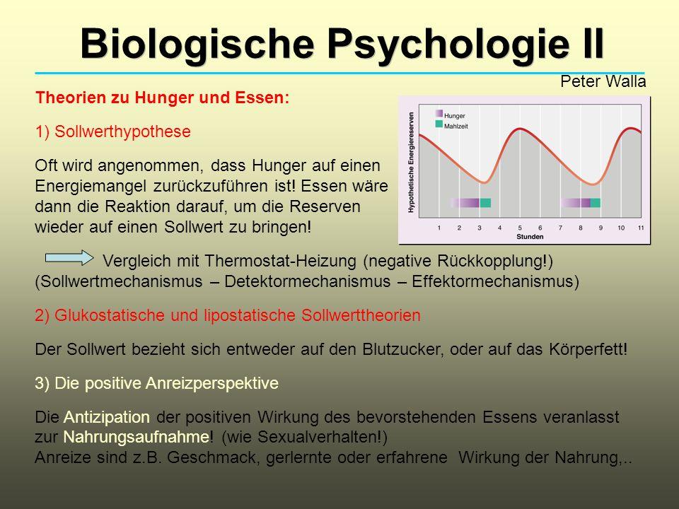 Biologische Psychologie II Peter Walla Theorien zu Hunger und Essen: 1) Sollwerthypothese Oft wird angenommen, dass Hunger auf einen Energiemangel zur