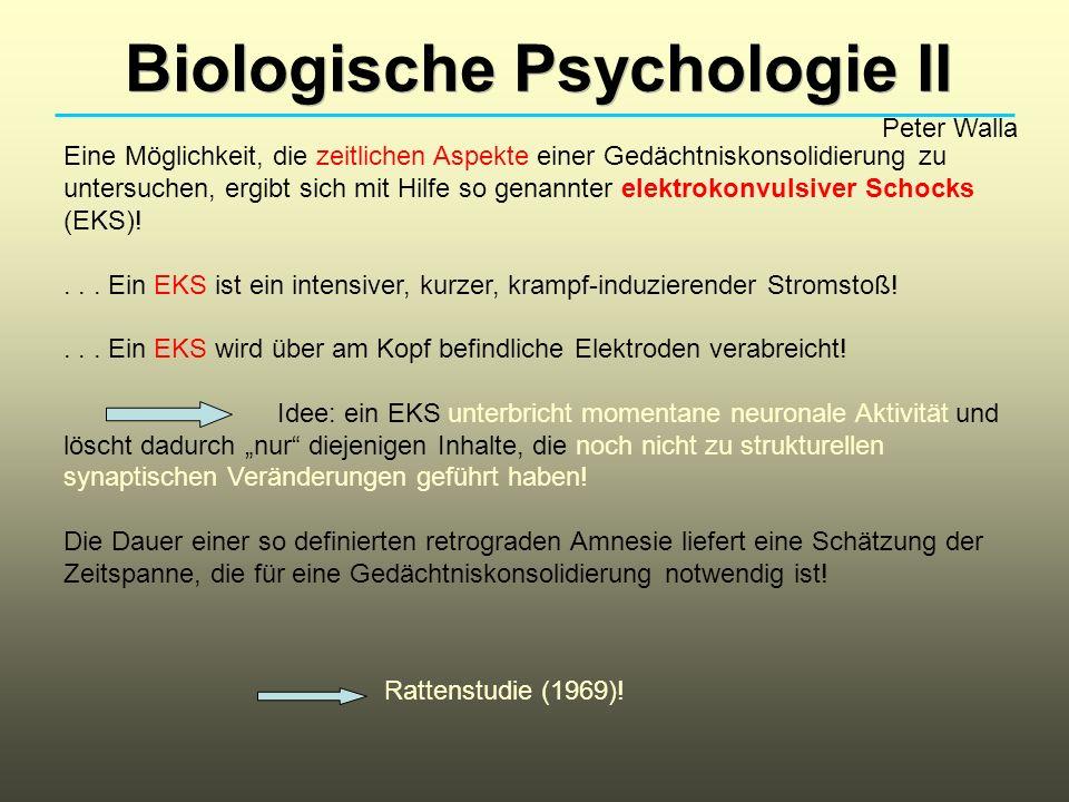 Biologische Psychologie II Peter Walla Eine Möglichkeit, die zeitlichen Aspekte einer Gedächtniskonsolidierung zu untersuchen, ergibt sich mit Hilfe so genannter elektrokonvulsiver Schocks (EKS)!...