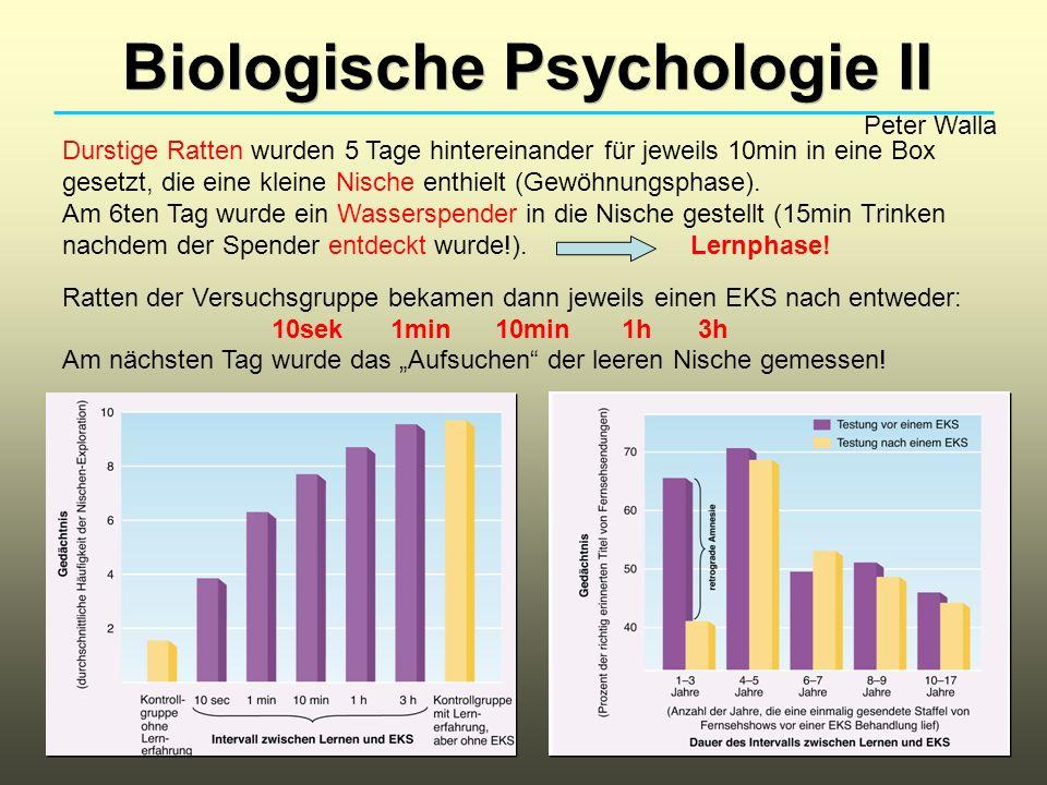 Biologische Psychologie II Peter Walla Durstige Ratten wurden 5 Tage hintereinander für jeweils 10min in eine Box gesetzt, die eine kleine Nische enth