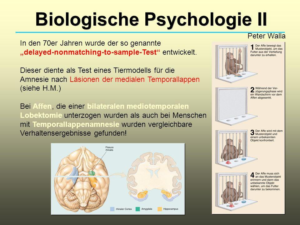 Biologische Psychologie II Peter Walla In den 70er Jahren wurde der so genannte delayed-nonmatching-to-sample-Test entwickelt. Dieser diente als Test