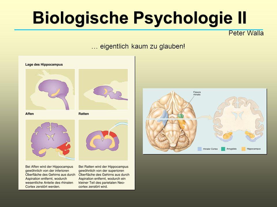 Biologische Psychologie II Peter Walla … eigentlich kaum zu glauben!