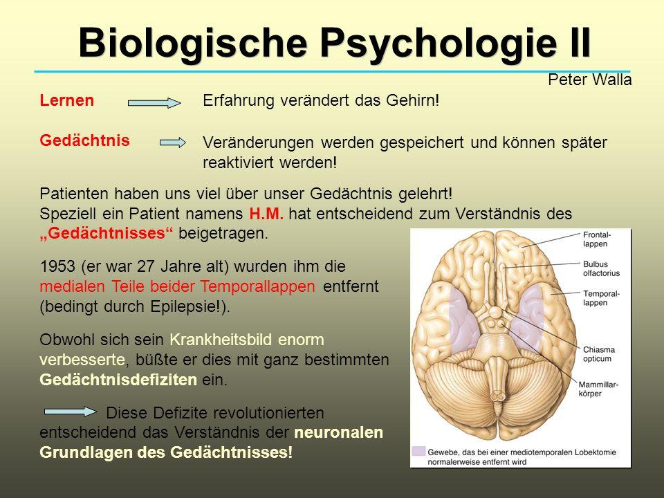 Biologische Psychologie II Peter Walla Lernen Gedächtnis Patienten haben uns viel über unser Gedächtnis gelehrt! Speziell ein Patient namens H.M. hat