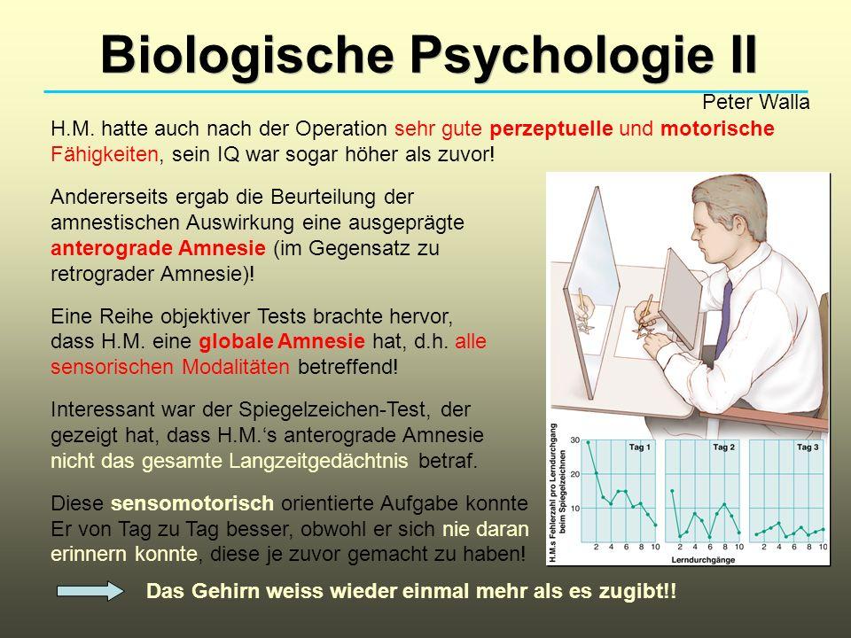 Biologische Psychologie II Peter Walla H.M. hatte auch nach der Operation sehr gute perzeptuelle und motorische Fähigkeiten, sein IQ war sogar höher a