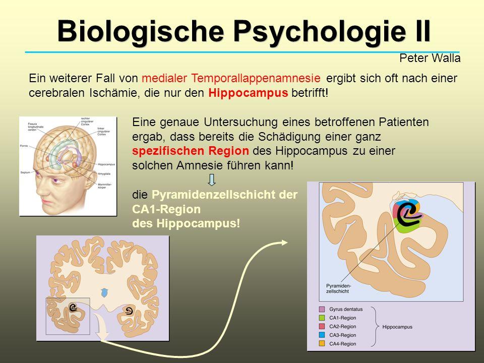 Biologische Psychologie II Peter Walla Amnesie beim Korsakoff-Syndrom: Neben Gedächtnisstörungen liegen sensorische und motorische Störungen vor, sowie auch Verwirrung, Persönlichkeitsveränderung und mehrere sonstige organische Probleme.