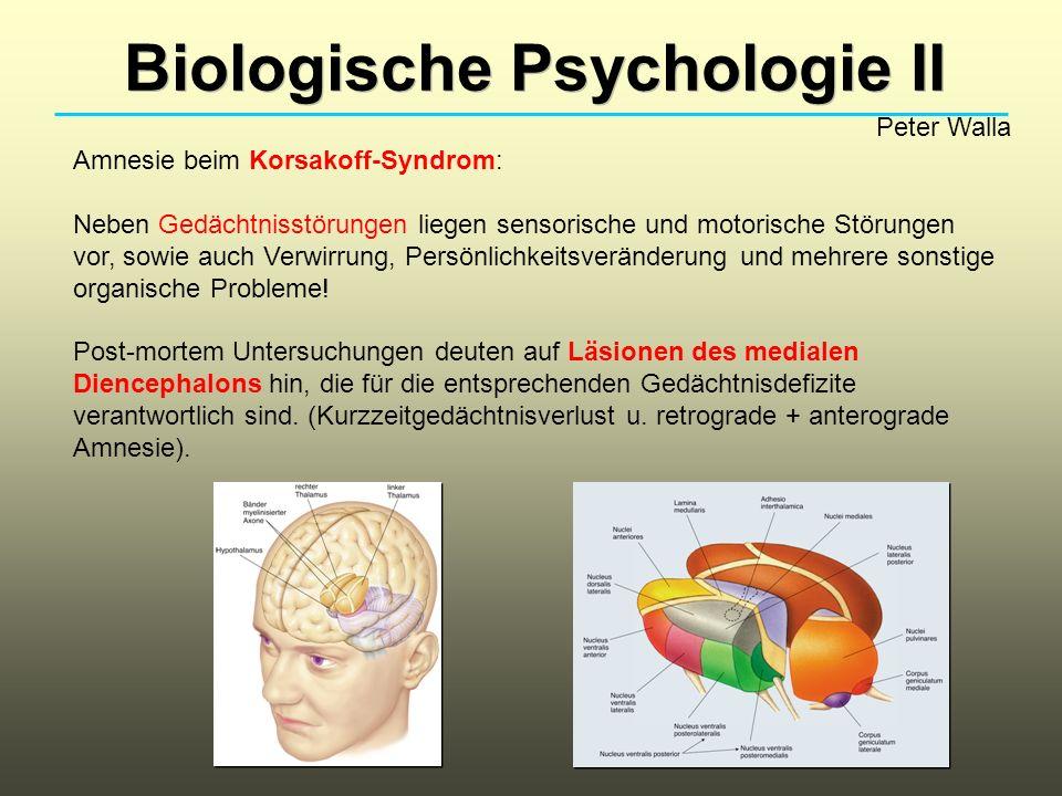 Biologische Psychologie II Peter Walla Amnesie bei der Alzheimer-Erkrankung: Zu einer retrograden, anterograden und das Kurzzeitgedächtnis betreffenden Amnesie kommt bei Alzheimer-Patienten noch eine teilweise Störung impliziter Gedächtnisfunktionen dazu.