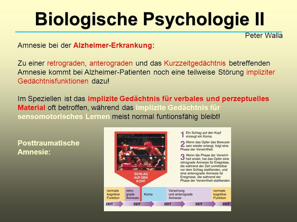 Biologische Psychologie II Peter Walla Amnesie bei der Alzheimer-Erkrankung: Zu einer retrograden, anterograden und das Kurzzeitgedächtnis betreffende