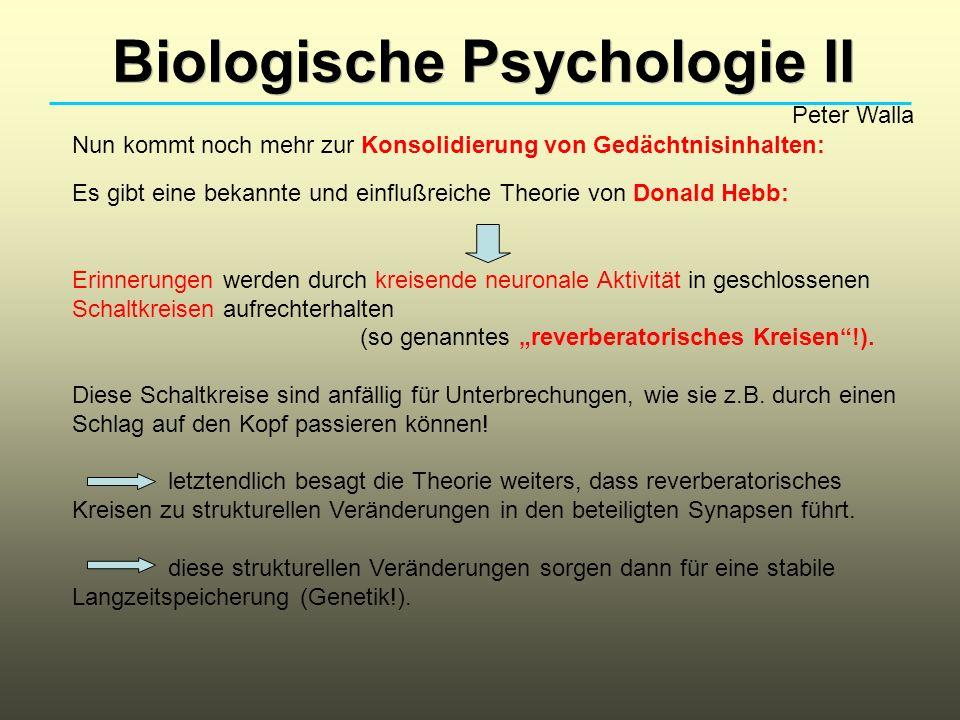 Biologische Psychologie II Peter Walla Nun kommt noch mehr zur Konsolidierung von Gedächtnisinhalten: Es gibt eine bekannte und einflußreiche Theorie
