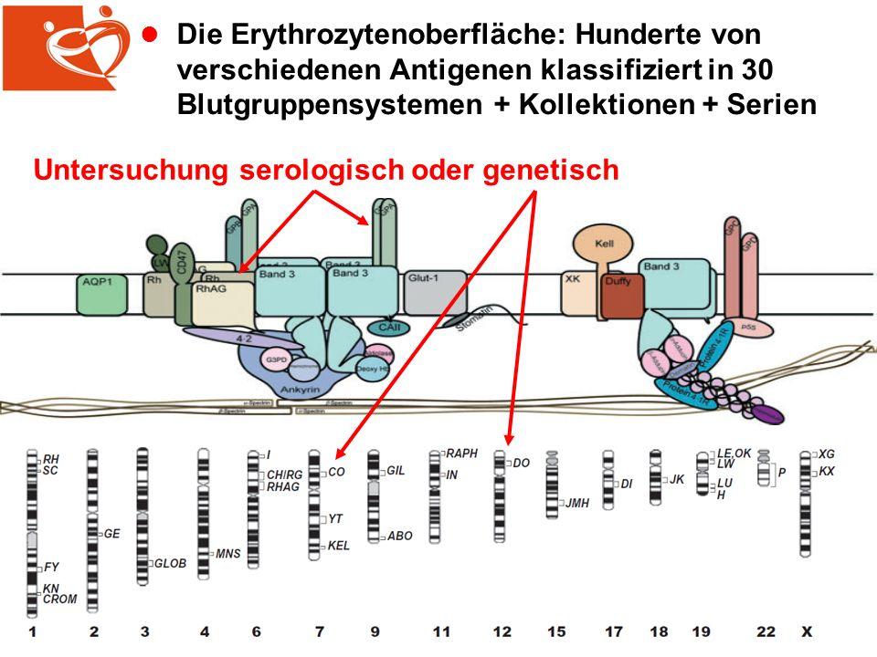 l Die Erythrozytenoberfläche: Hunderte von verschiedenen Antigenen klassifiziert in 30 Blutgruppensystemen + Kollektionen + Serien Untersuchung serologisch oder genetisch