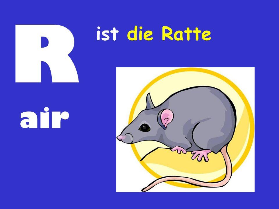 R air ist die Ratte