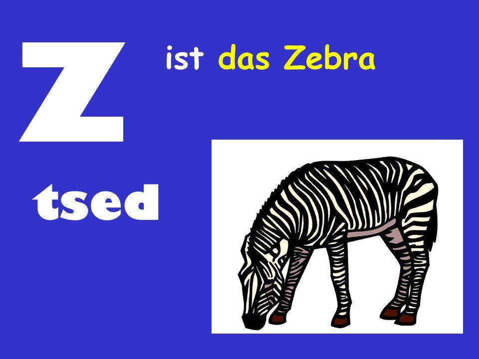 Z tsed ist das Zebra