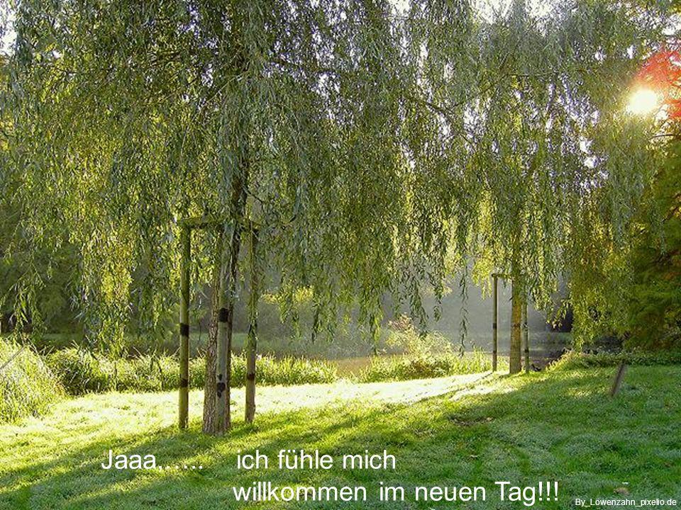 Für Heute ….wird mir gelingen, was meine HM (Höhere Macht) für mich vorgesehen hat… By_Peter-Wetzel_pixelio.de