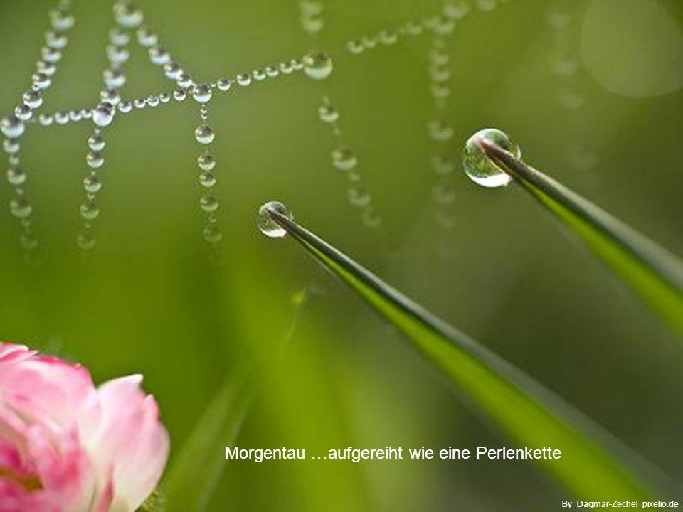 Für Heute - will ich mich öffnen für alles Neue im Leben - ich schaue nach vorne und werde getragen von Mutter Erde und der Natur - demütig will ich annehmen, was ich nicht ändern kann By_Maria-Lanznaster_pixelio.de