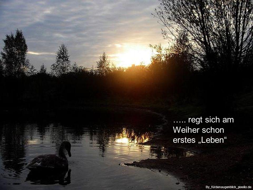 … wenn die Sonne erwacht am Horizont By_Birgit-Winter_pixelio.de
