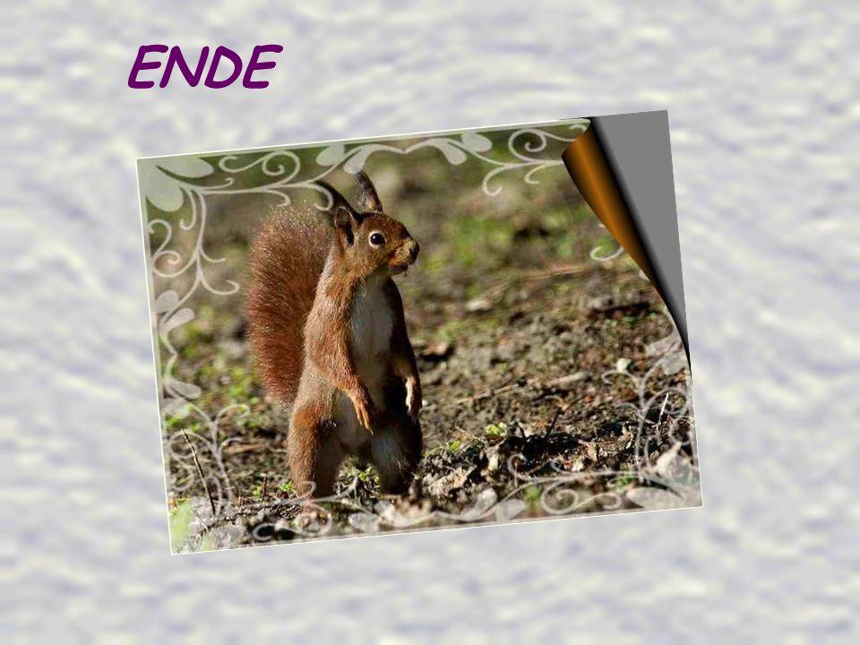 Ein schönes Erlebnis zwischen Mensch und Tier, dem kleinen Eichhörnchen und mir.