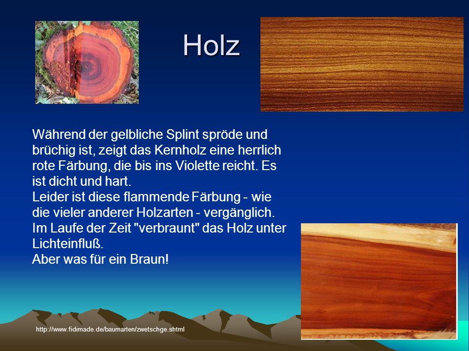 Holz Während der gelbliche Splint spröde und brüchig ist, zeigt das Kernholz eine herrlich rote Färbung, die bis ins Violette reicht.