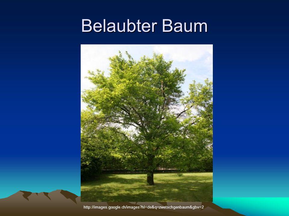 Belaubter Baum http://images.google.ch/images?hl=de&q=zwetschgenbaum&gbv=2