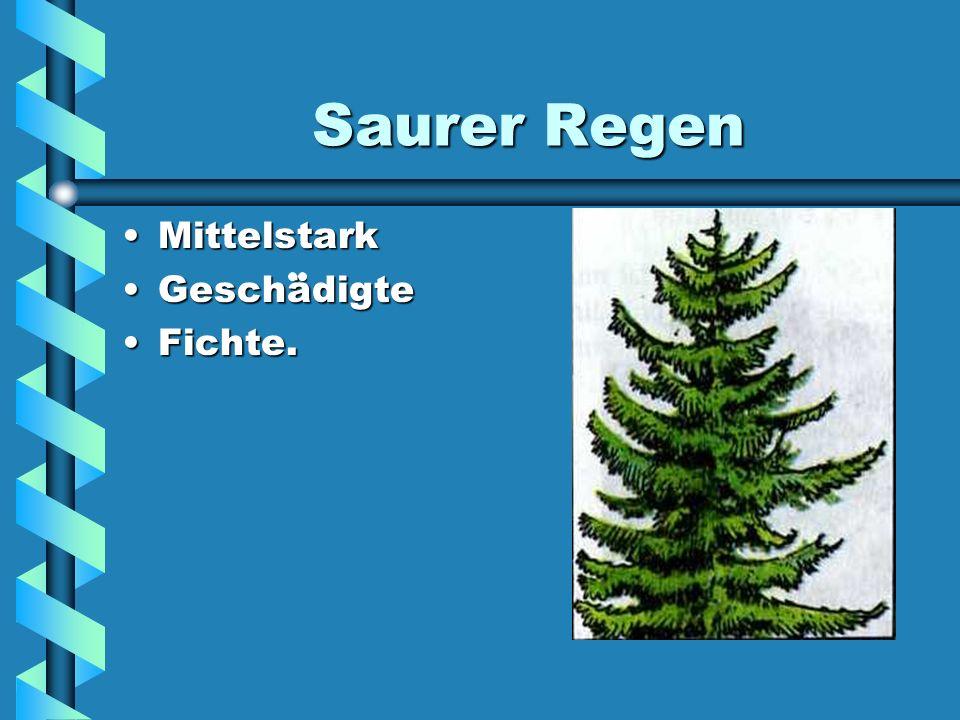 Saurer Regen SchtarkSchtark GeschädigteGeschädigte Fichte.Fichte.